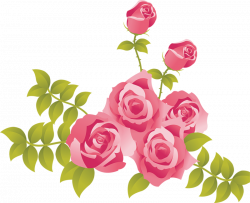 White Rose clipart painted