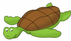Pirate clipart turtle