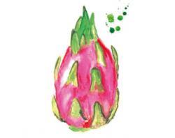 Pitaya clipart botanical art