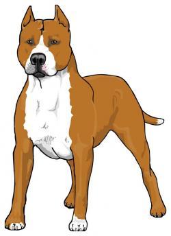 Pit Bull clipart pitbull terrier