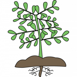 Roots clipart leave