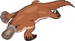 Platypus clipart animated