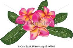 Frangipani clipart pink