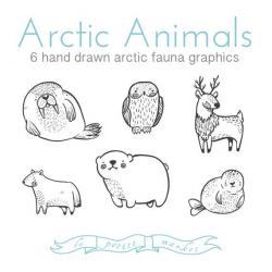 Drawn polar  bear arctic animal
