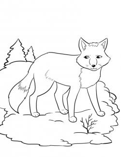 Arctic Hare clipart