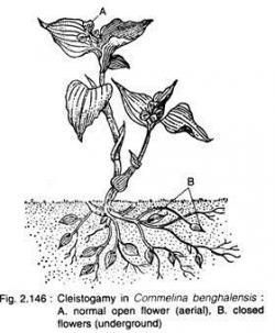 Pollination clipart autogamy