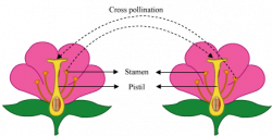 Pollination clipart cross pollination