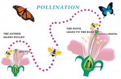 Pollination clipart flowering plant