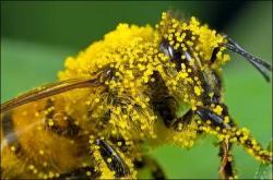 Pollination clipart pollen
