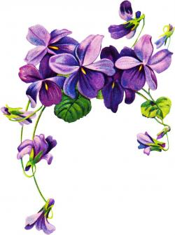 Drawn orchid lilac flower
