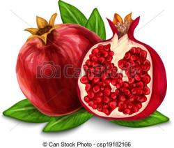 Grenade clipart pomegranate