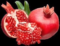 Pomegranate clipart vector