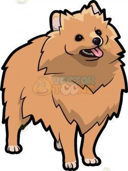 Pomeranian clipart fluffy dog