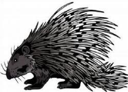 Gray clipart porcupine