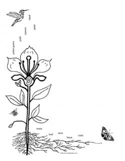 Pollination clipart black and white