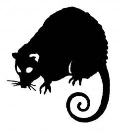 Opossum clipart black and white