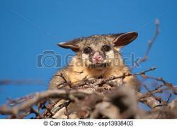 Possum clipart brush