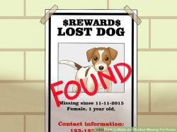 Pets clipart lost dog