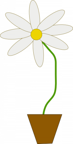 Camomile clipart potted plant
