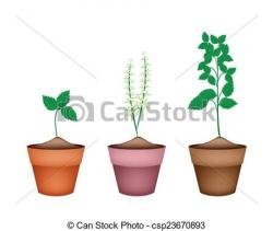 Basil clipart potted plant