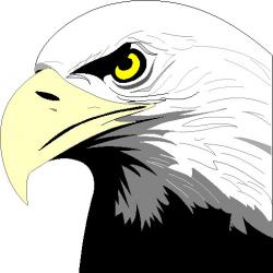 Golden Eagle clipart eagle beak