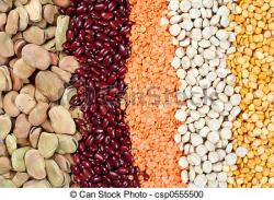 Pulse clipart bean seed