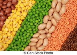 Pulse clipart dry bean
