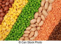 Pulse clipart dry bean