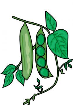 Pulse clipart pea plant