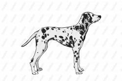 Dalmatian clipart realistic dog