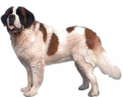 Saint Bernard clipart three dog