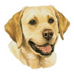 Labrador Retriever clipart yellow lab