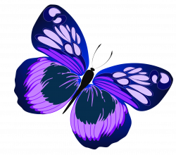 Purple Rose clipart real butterfly