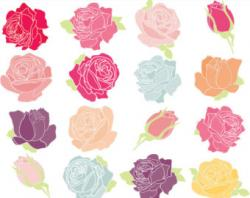 Pink Rose clipart shabby chic