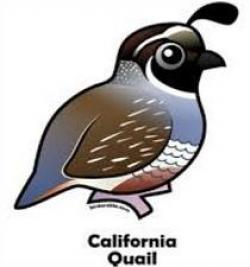 Quail clipart california state