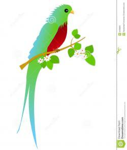 Quetzal  clipart cute