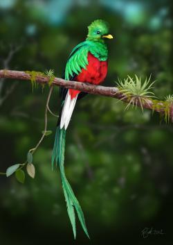 Quetzal  clipart rainforest bird
