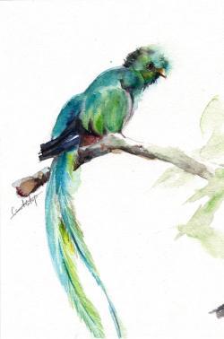 Quetzal  clipart watercolor