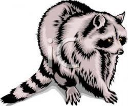 Raccoon clipart omnivore