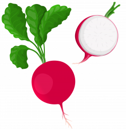 Beetroot clipart turnip