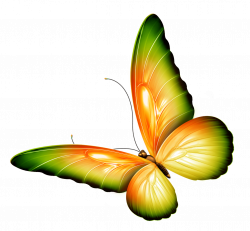 Photoshop clipart 3d butterfly