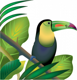 Toucanet clipart amazon rainforest