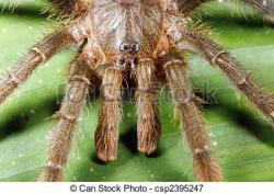 Tarantula clipart rainforest animal