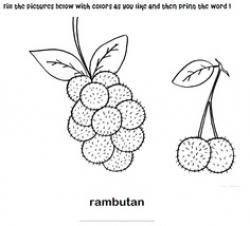 Rambutan clipart coloring