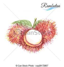 Rambutan clipart lychee