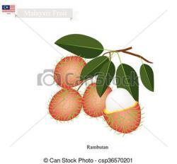 Rambutan clipart malaysian