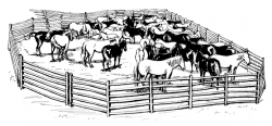 Herd clipart black and white