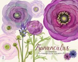 Ranuncula clipart bouquet