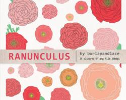 Ranuncula clipart hand drawn flower