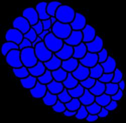 Berry clipart blue raspberry